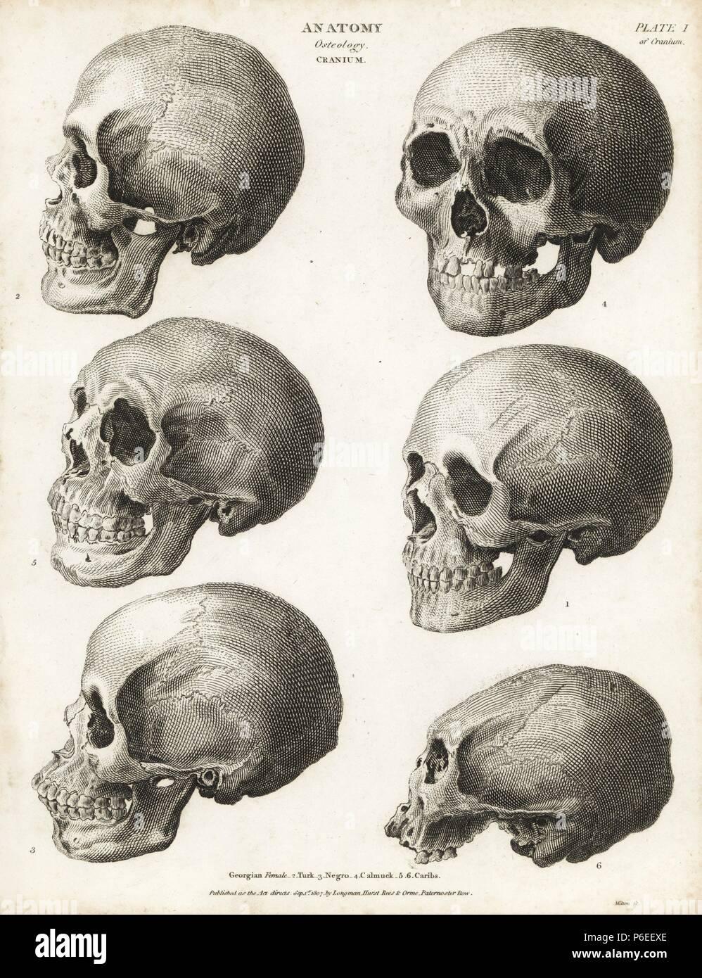 Anatomie des menschlichen Schädels: Georgisch weiblich, Türken ...