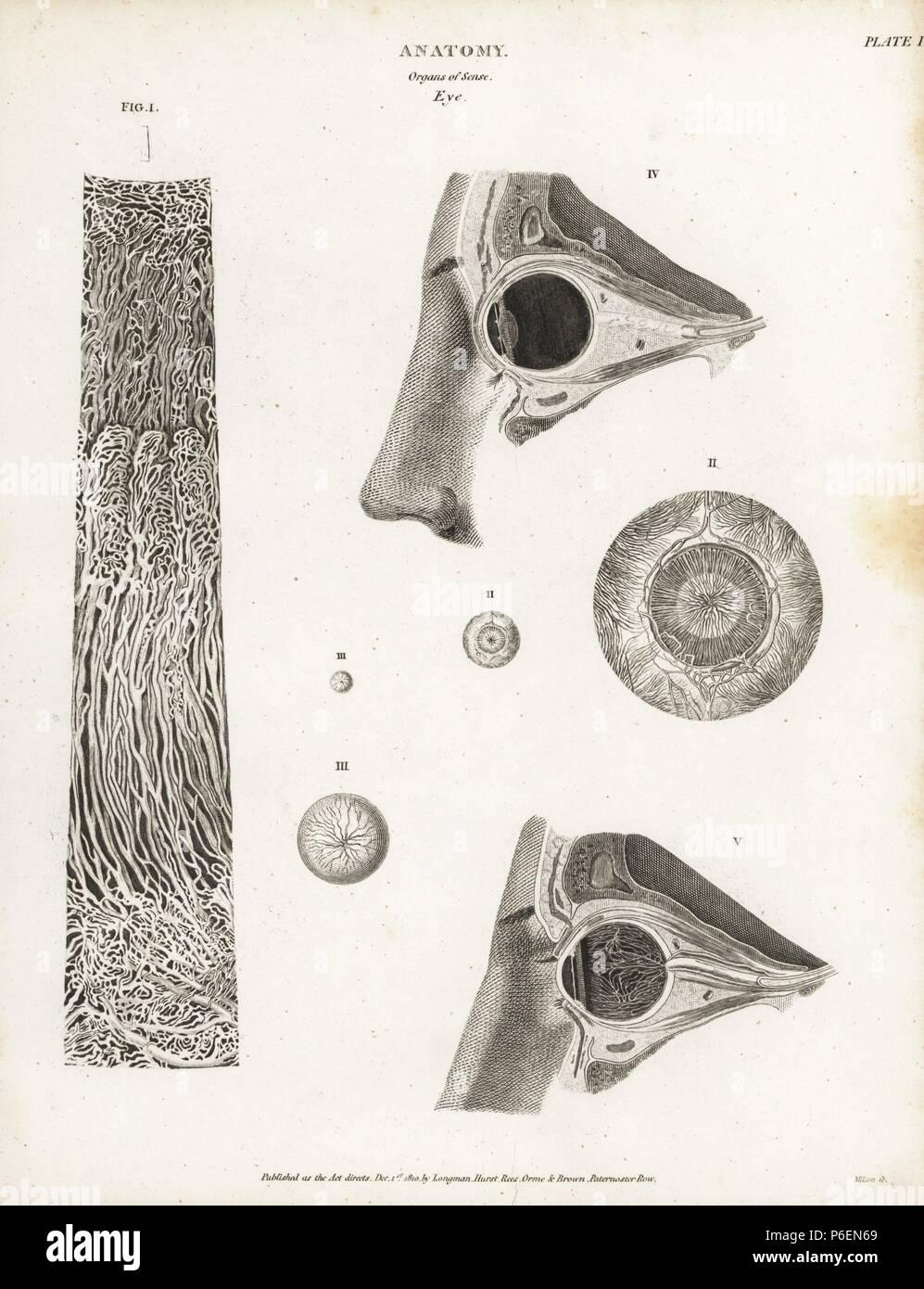 Charmant Grauwal Anatomie Bilder - Physiologie Von Menschlichen ...