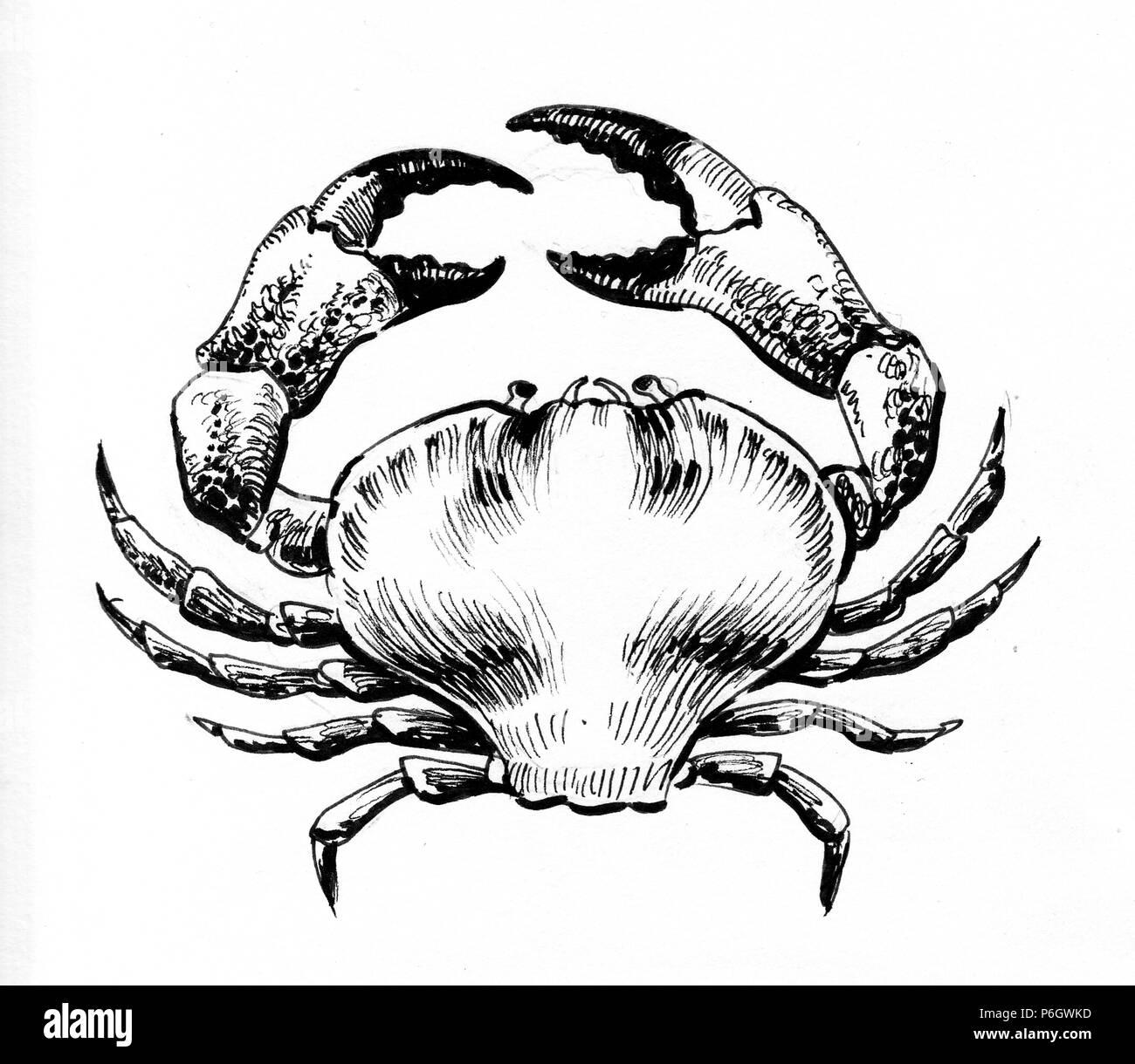 Atemberaubend Krabbe Anatomie Innen Ideen - Anatomie Von ...