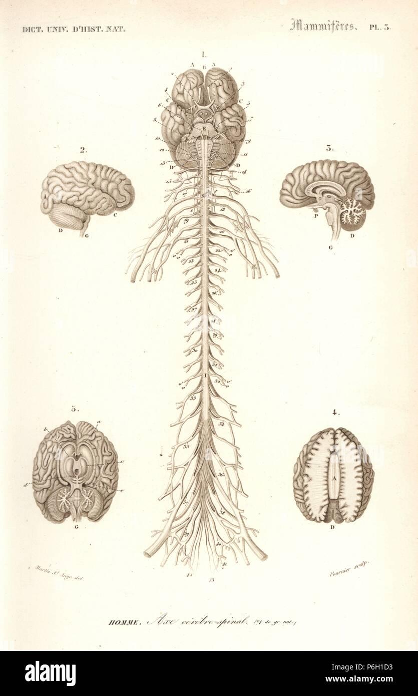 Fantastisch Mcgraw Hill Anatomie Und Physiologie Saladin 6. Auflage ...