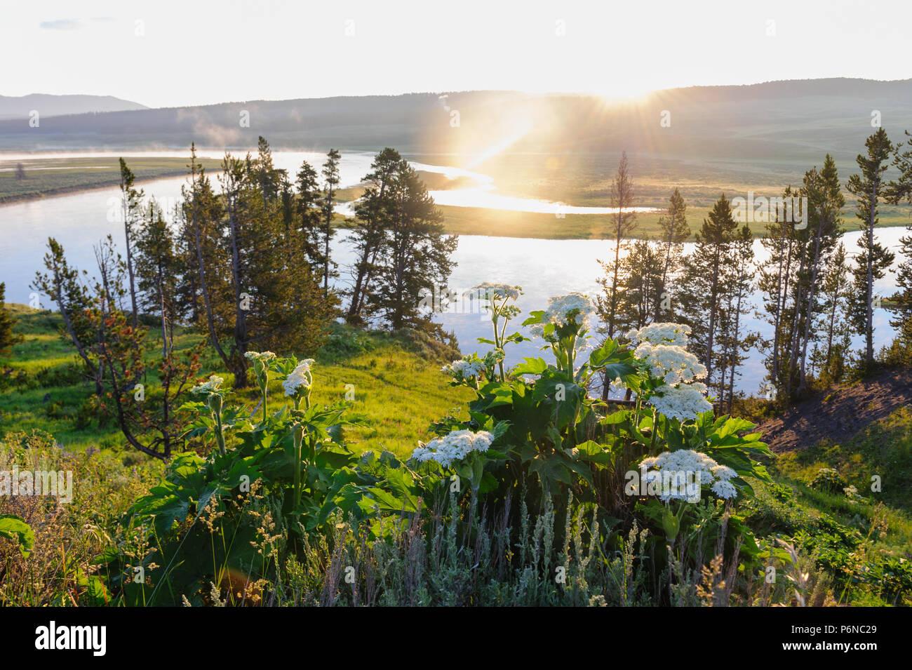 Der Yellowstone River schlängelt sich durch Hayden Valley Stockbild