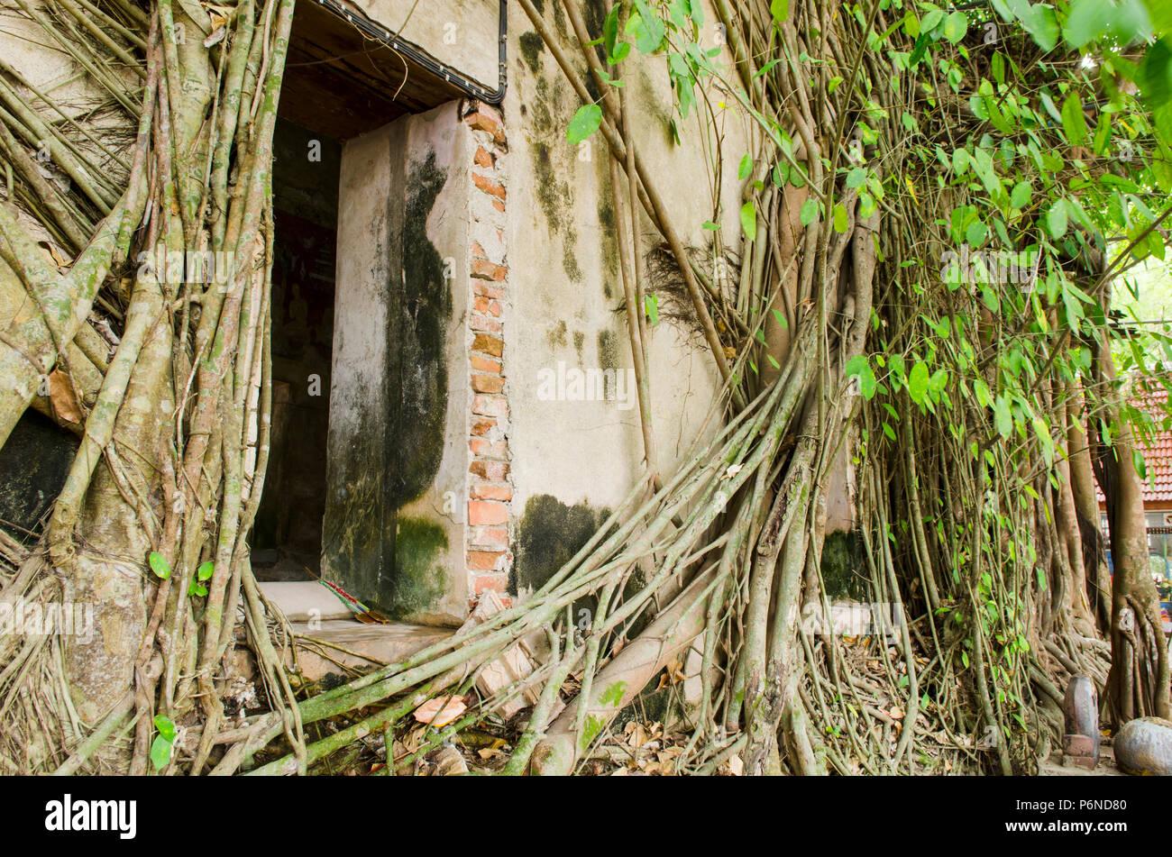 Bang Kung Stockfotos Bang Kung Bilder Alamy