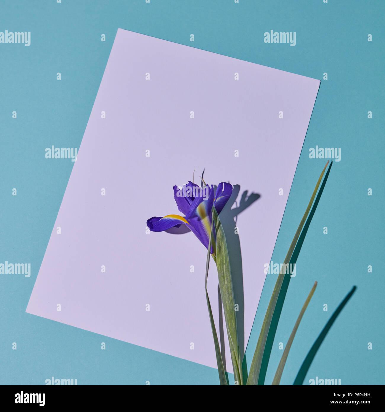 Pink Flower Shadow Stockfotos & Pink Flower Shadow Bilder - Seite 6 ...