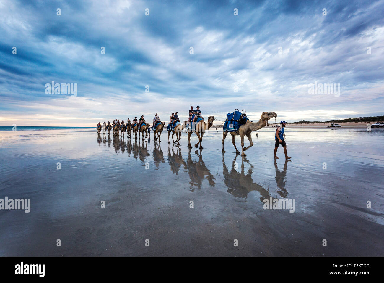 Cable Beach, West-Australien. Kamele am Strand bei Sonnenuntergang Stockbild