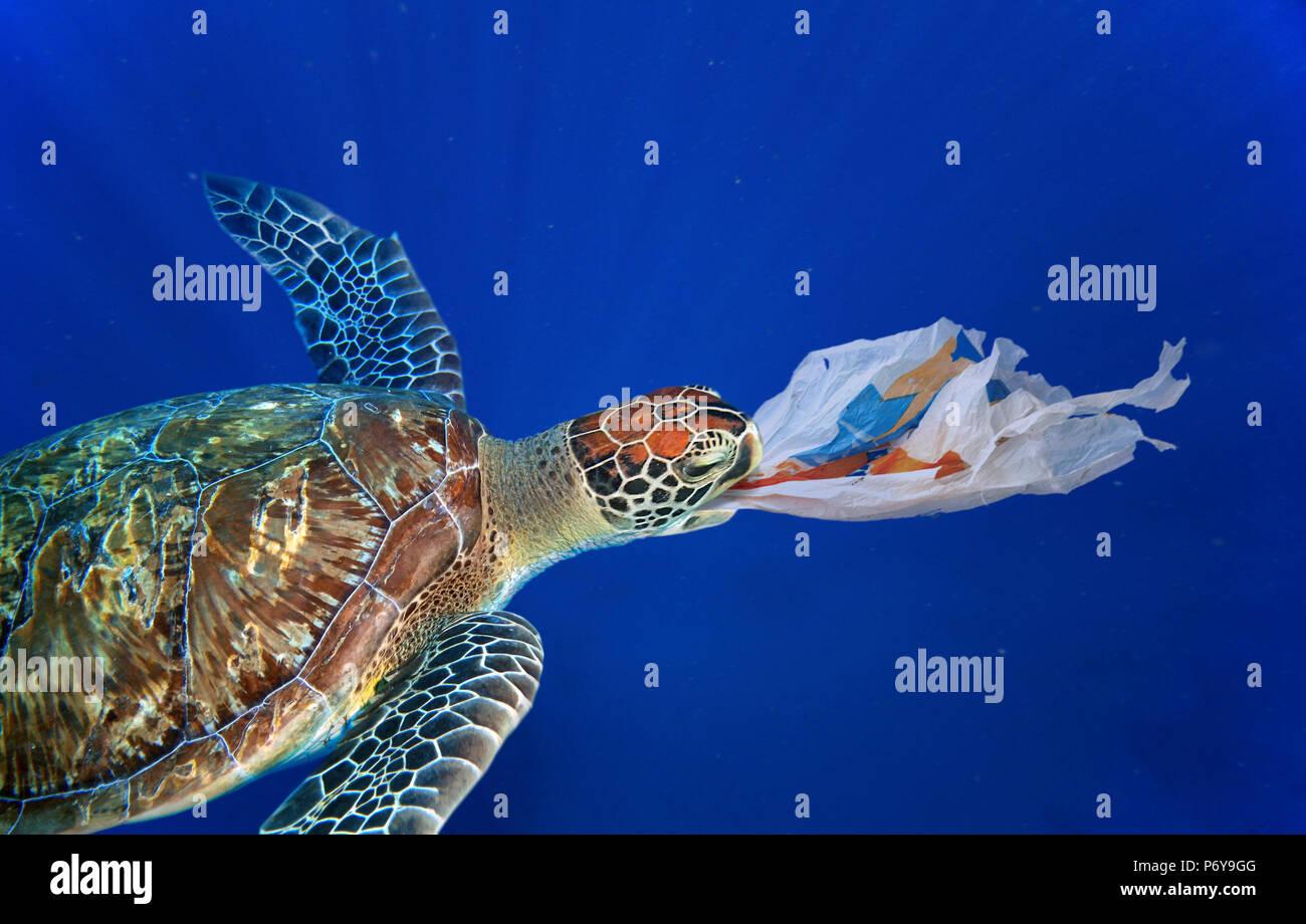 sea turtle schlucken eine plastikt te viel wie eine qualle die ist eine der nat rliche nahrung. Black Bedroom Furniture Sets. Home Design Ideas