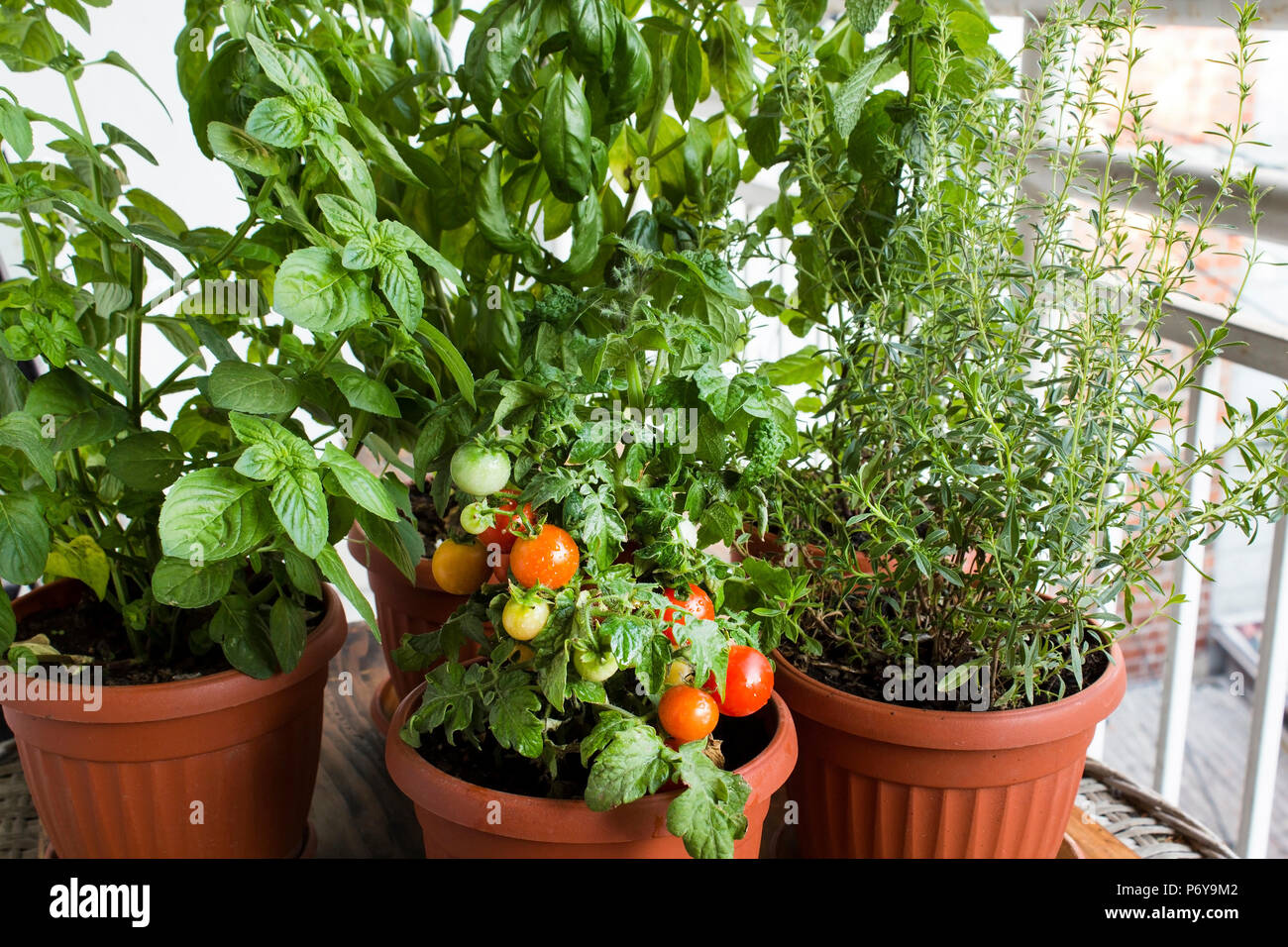 Krautergarten Kubelpflanzen Auf Der Terrasse Stockfoto Bild