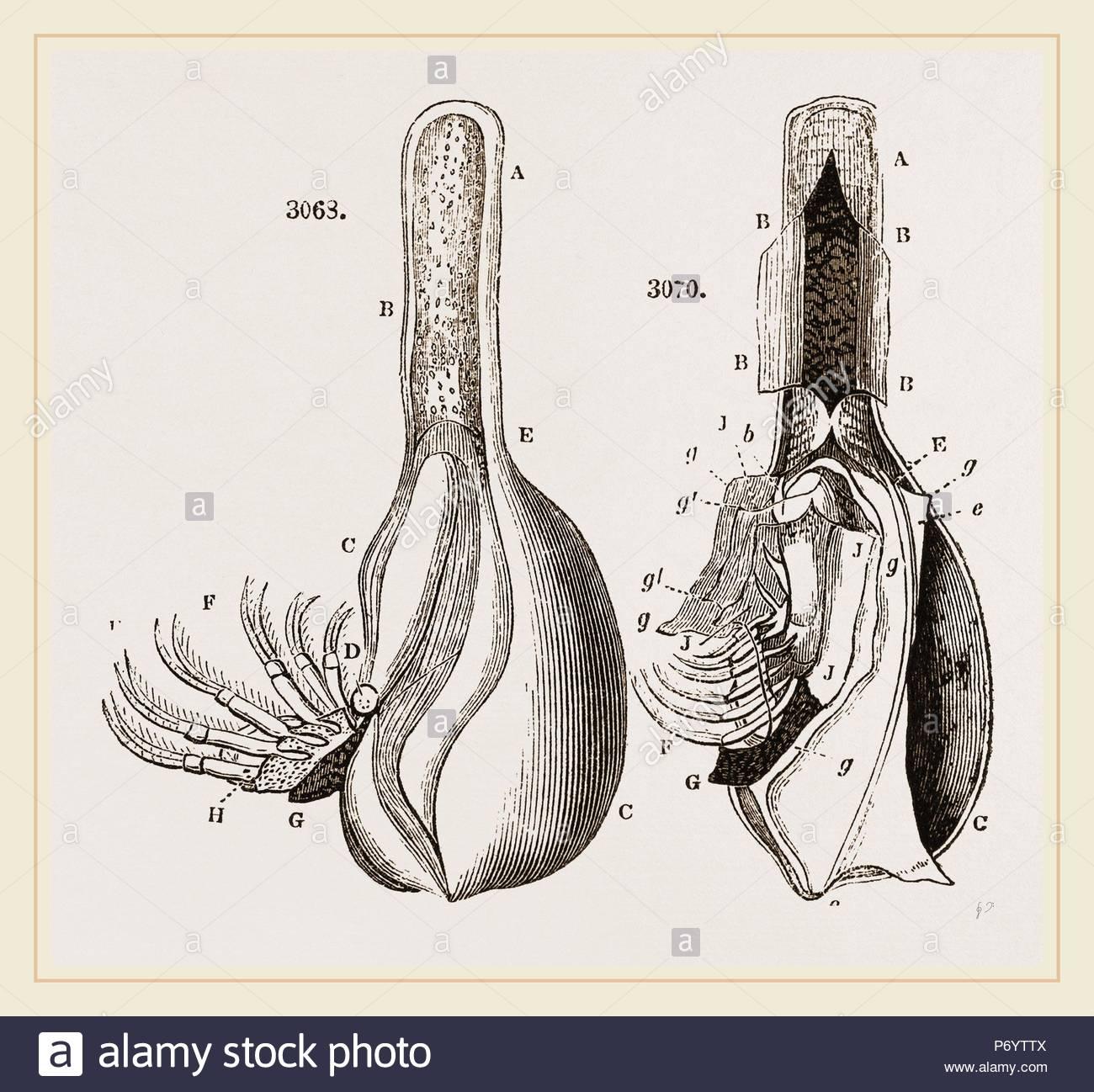 Gross Anatomy Stockfotos & Gross Anatomy Bilder - Alamy