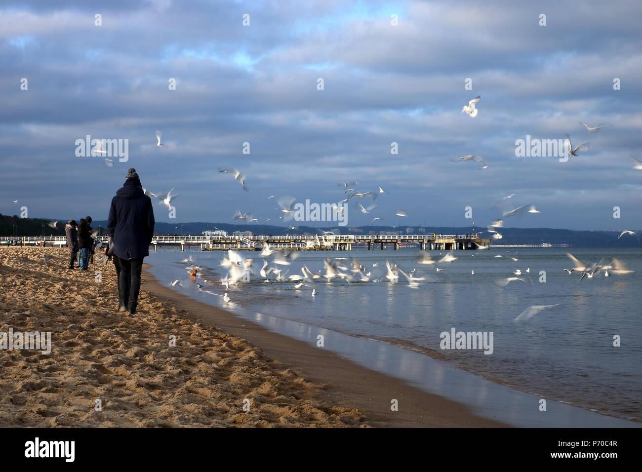 Meer, Meer Vögel fliegen, Menschen mit Sandstrand, kaltes Wetter, bewölkter Himmel, Menschen in Jacken und Mützen bekleidet Stockbild
