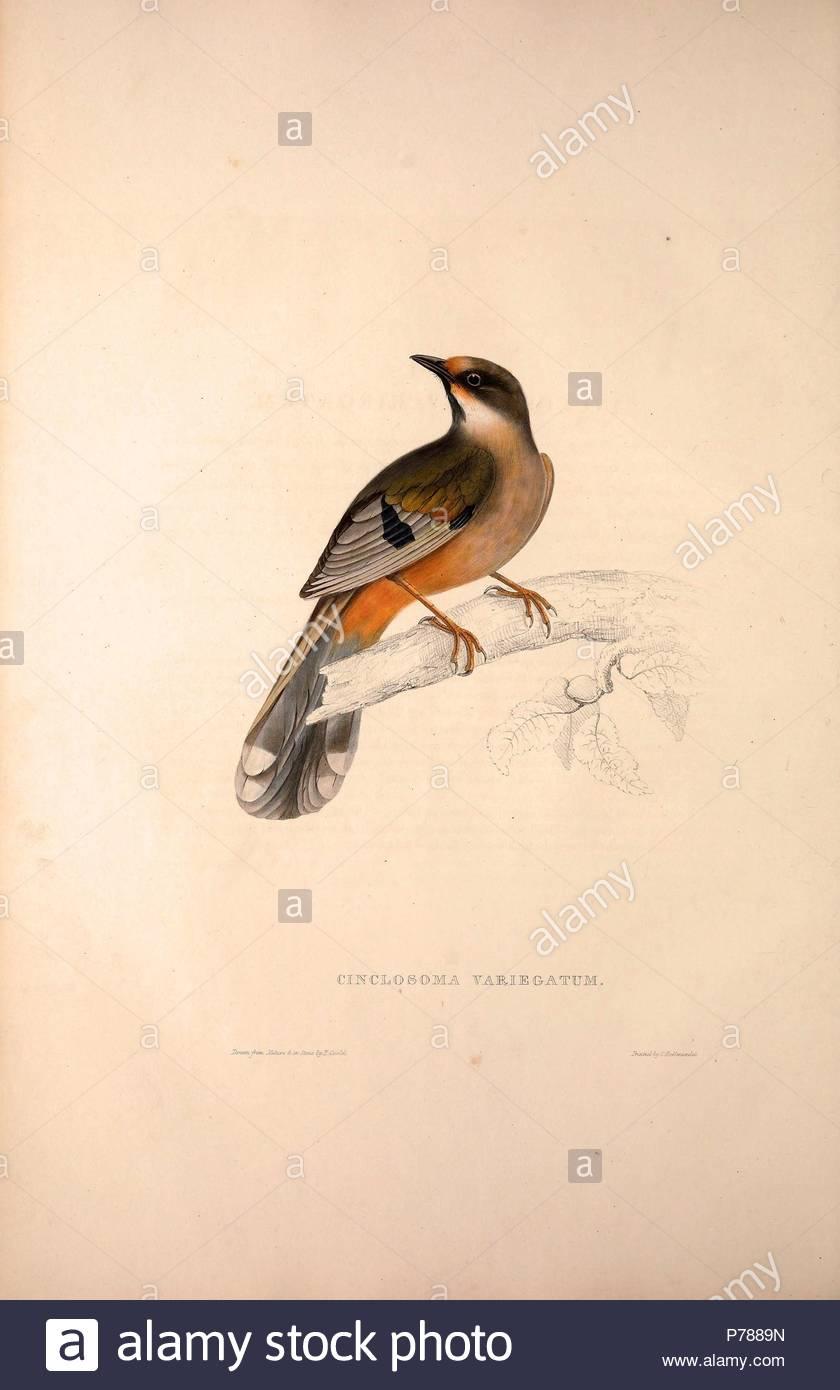 öffentlich vögeln