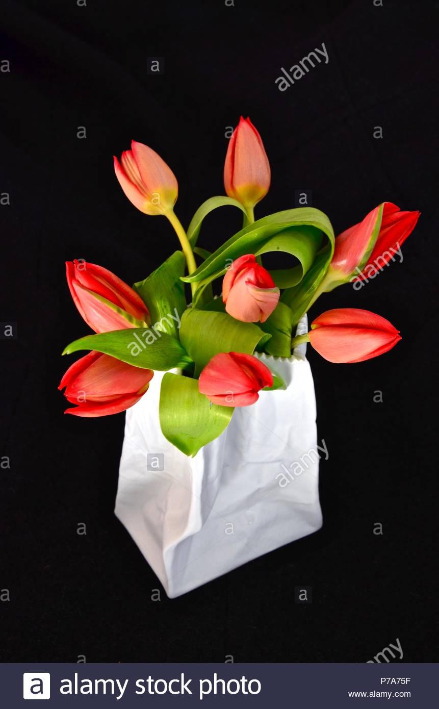 Rote Tulpen In Einer Weissen Vintage Vase Niederlande Blumen