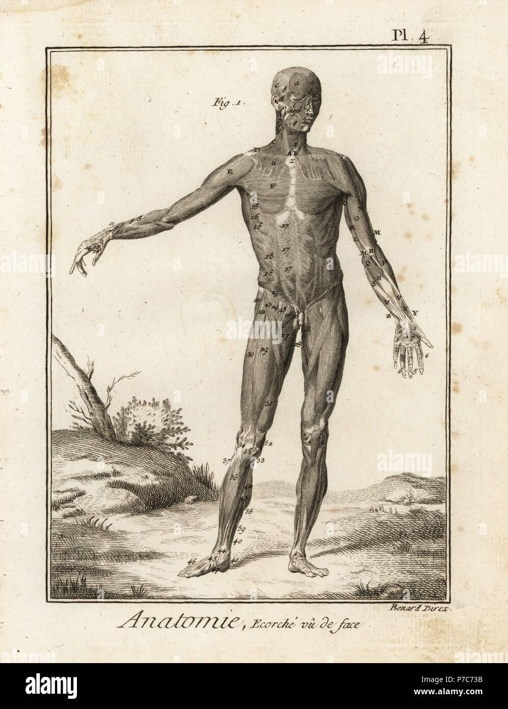 Schön Albinus über Anatomie Zeitgenössisch - Anatomie Von ...