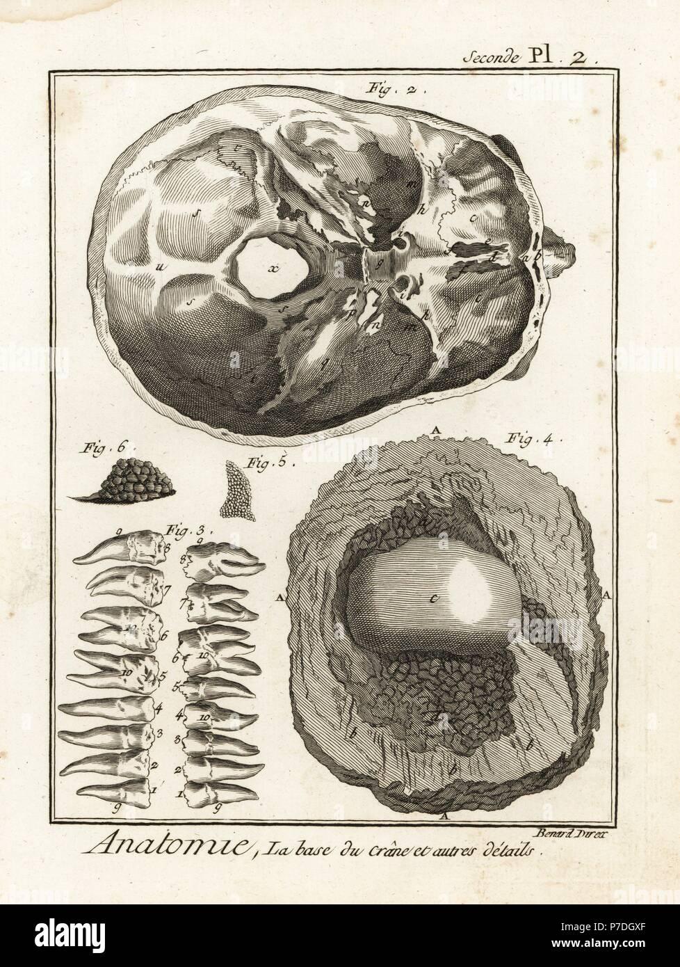 Großartig Endoskopische Schädelbasis Anatomie Ideen - Anatomie Von ...