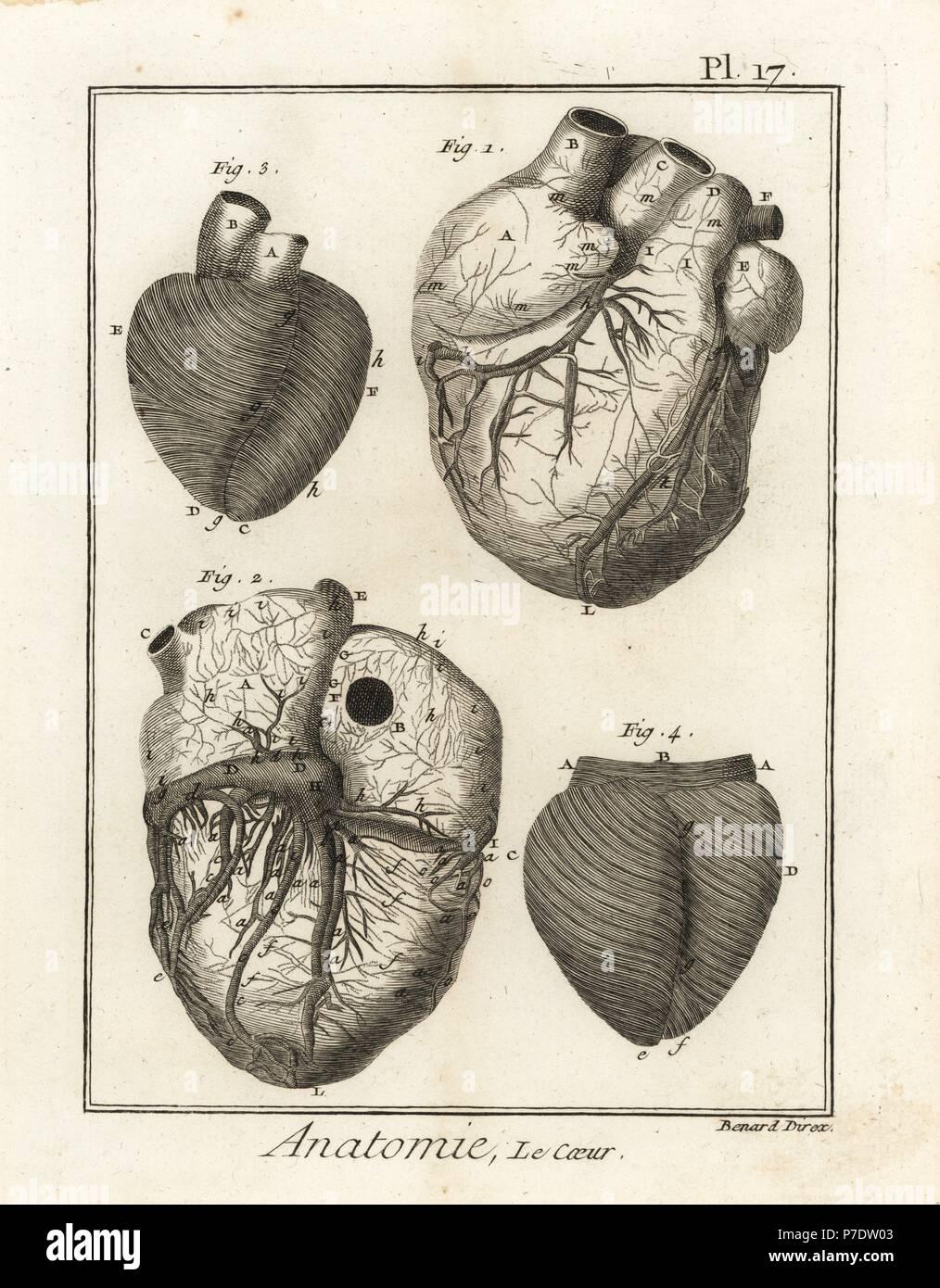Schön Osteomeatal Komplexe Anatomie Fotos - Anatomie Von ...