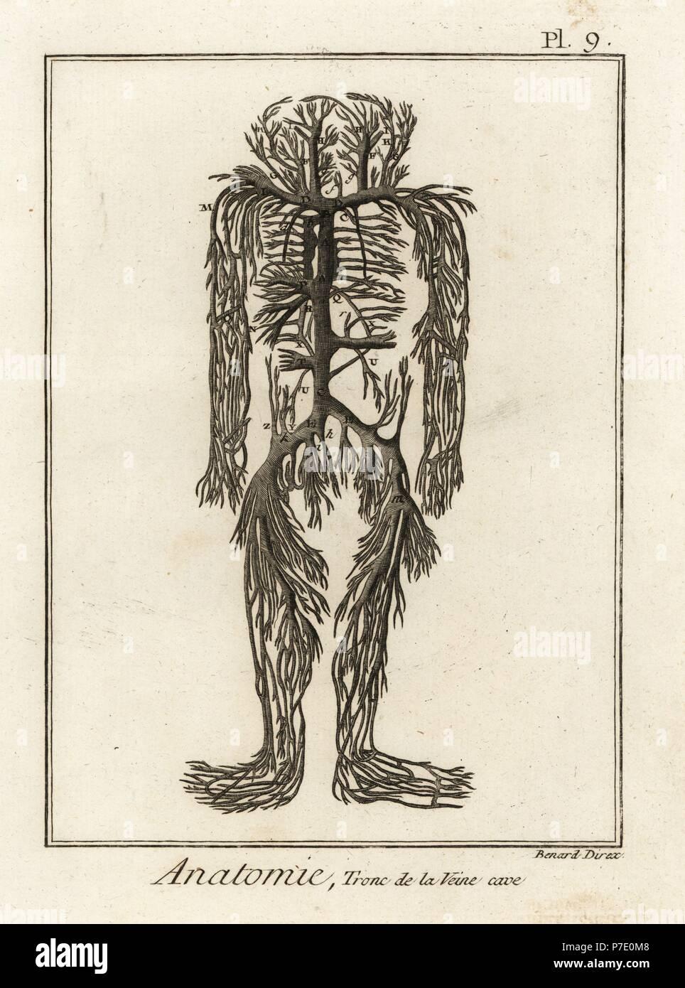 Ausgezeichnet Enzyklopädie Der Menschlichen Anatomie Bilder ...