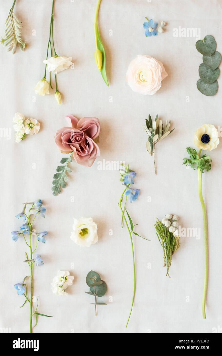Noch immer leben in Pastell farbige Blätter, Blüten und Stiele, Ansicht von oben Stockfoto