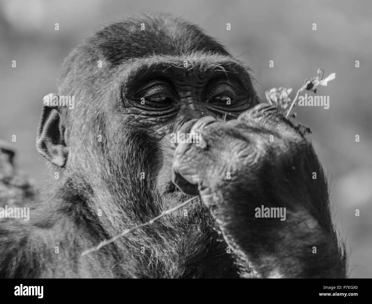 Tier Nahaufnahmen schließen Gesicht Gesichtsbehandlung teilweise Stockbild
