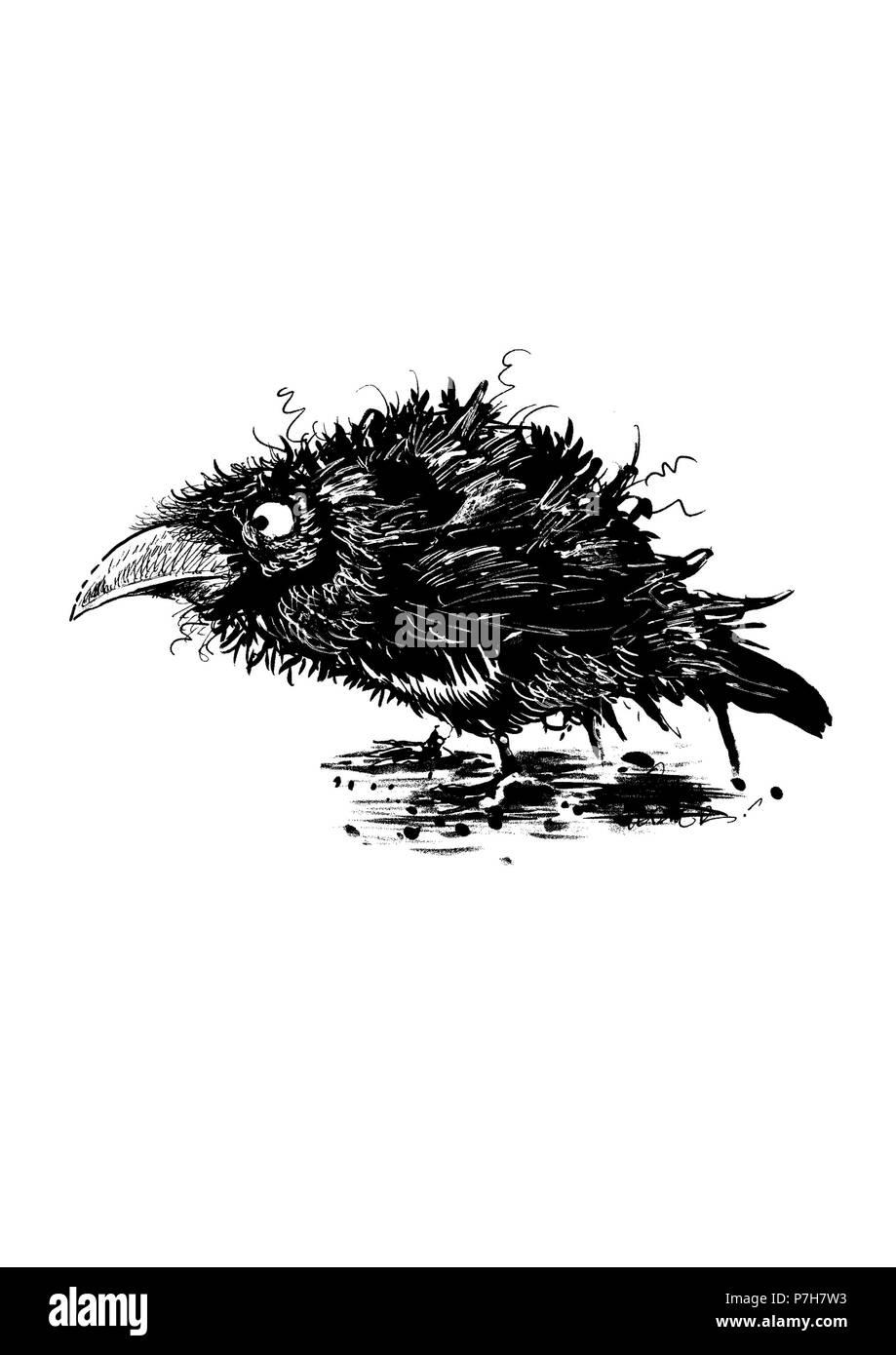 Grafik schwarze und weiße Krähe auf weißem Hintergrund. Stockbild