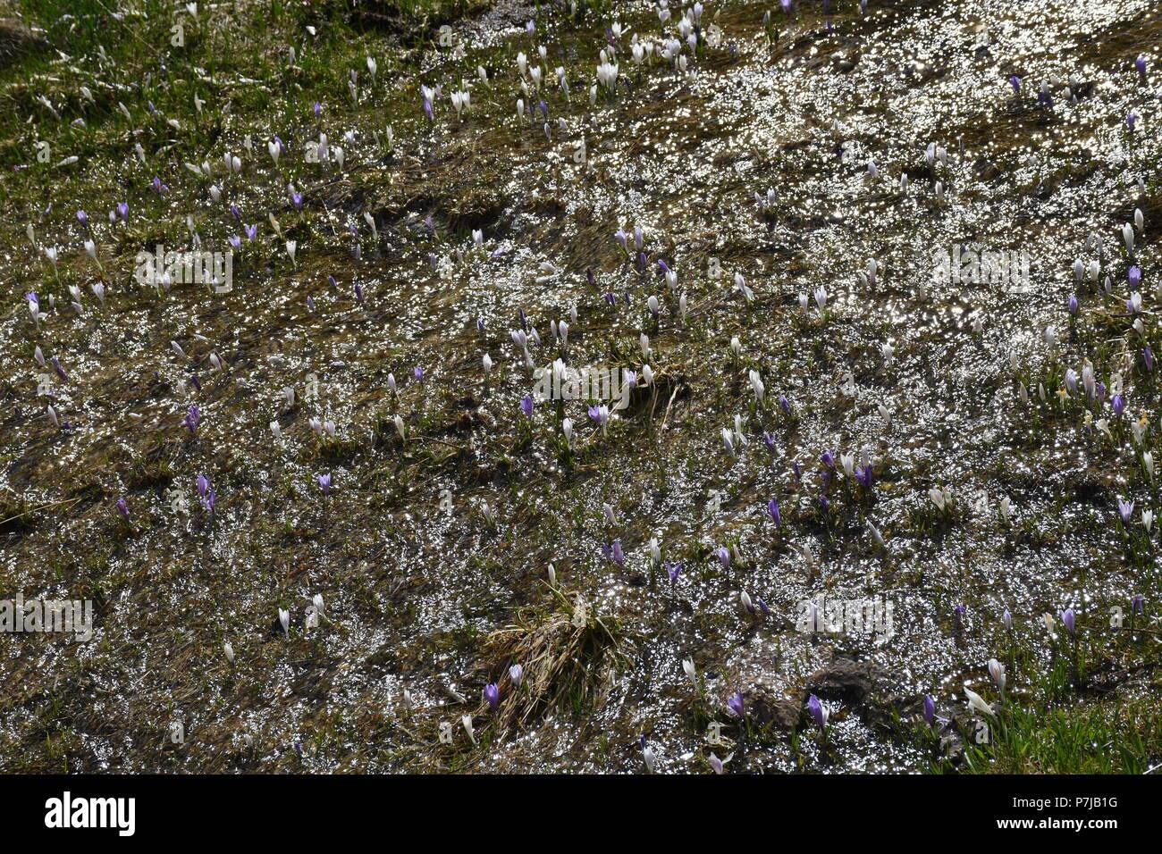 Pfütze Froschlaich Laich Eier Gelee Gell Stockbild