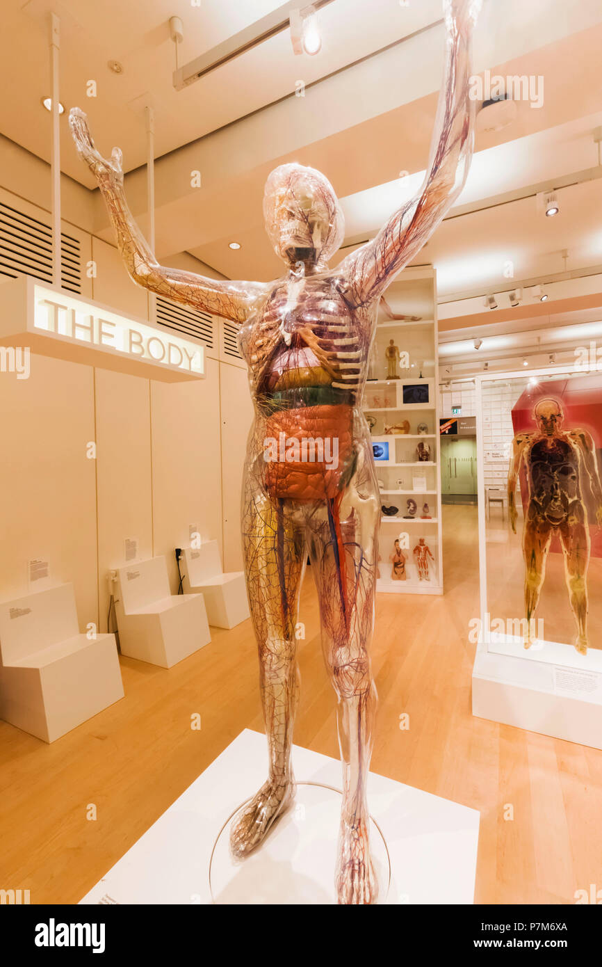 England, London, der Wellcome Collection, transparent Modell des menschlichen Körpers Stockbild