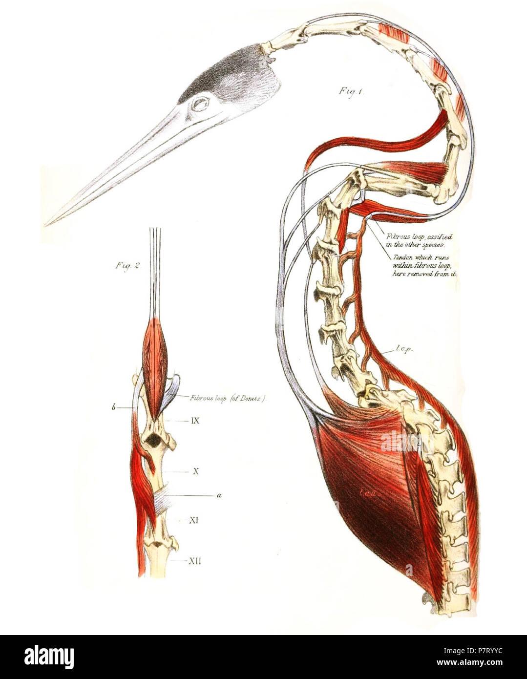 Berühmt Linken Unterbauch Anatomie Galerie - Anatomie Von ...