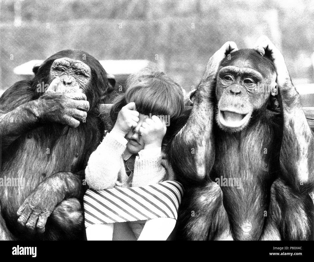 Zwei Affen Nichts Sehen Nichts Hören Nichts Sagen