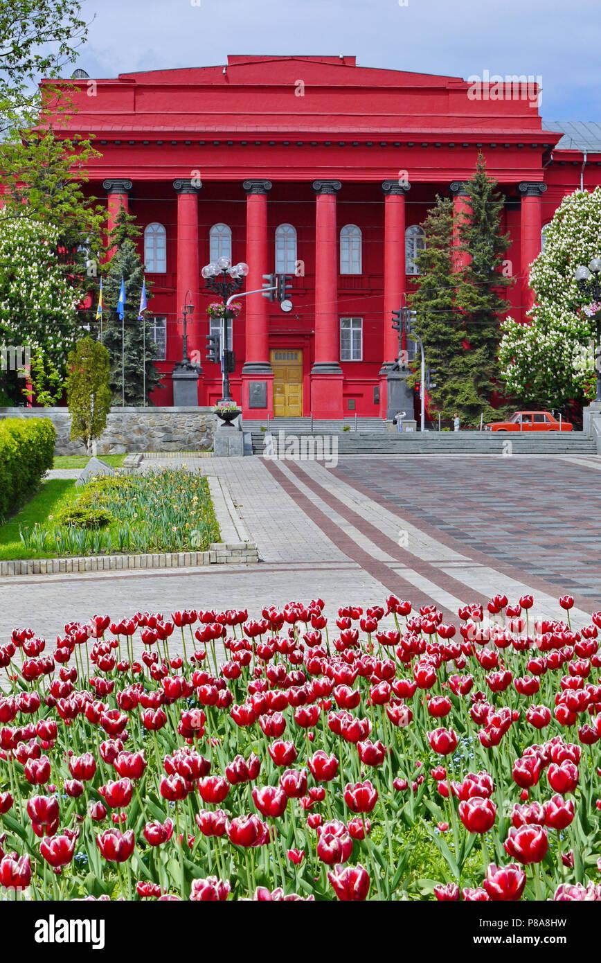 Die älteste Rote Gebäude der Taras-schewtschenko-Universität Kiew ist harmonisch mit roten Tulpen im Beet von Kiew kombiniert. In der Ukraine. Stockbild