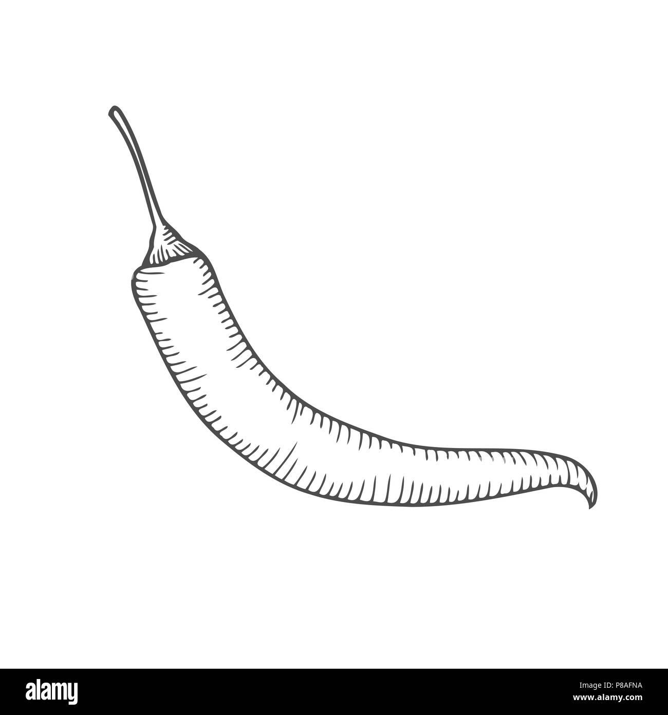 Chilly Hot Pepper Vektor Handgezeichnete Illustrationen