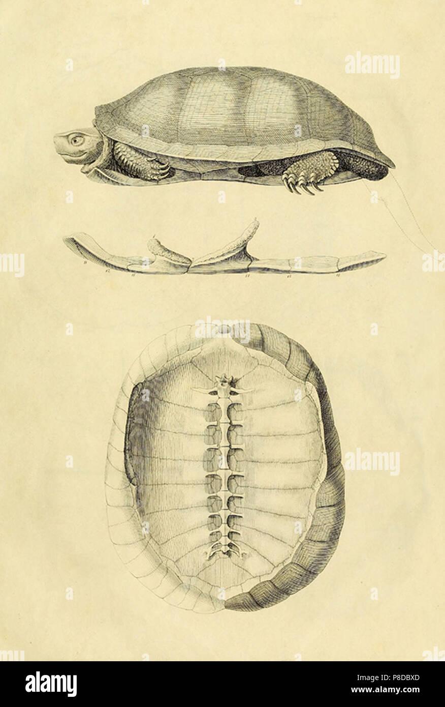 Turtle Anatomie Stockfoto, Bild: 211736405 - Alamy