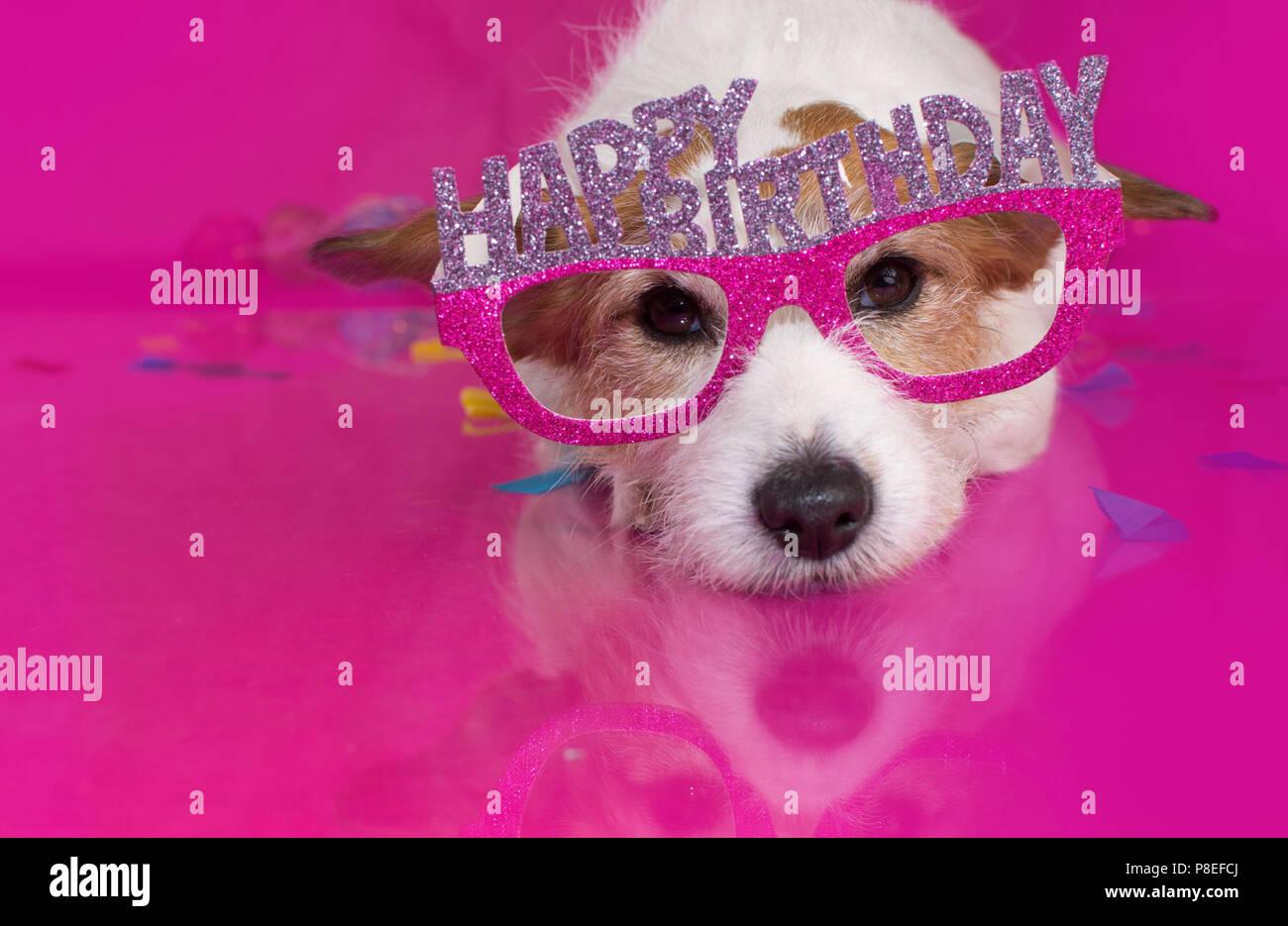 Cute Geburtstag Hund Feier Auf Rosa Hintergrund Liegend Stockfoto