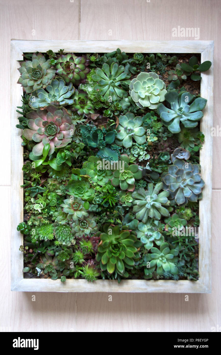 Die Senkrechte Wand Garten Konzept Verschiedene Sukkulenten In Holz
