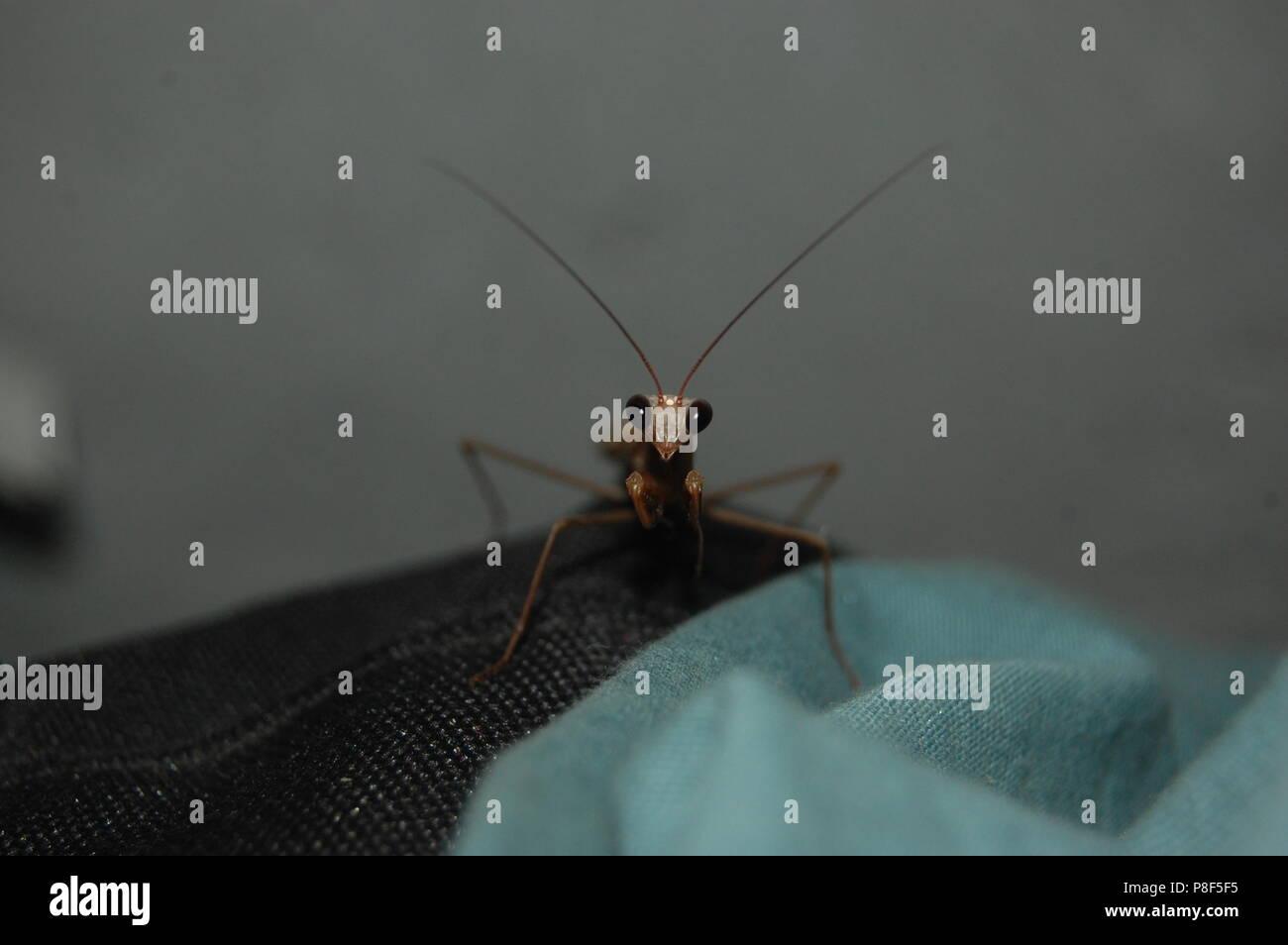 Neugierig Mantis Stockbild