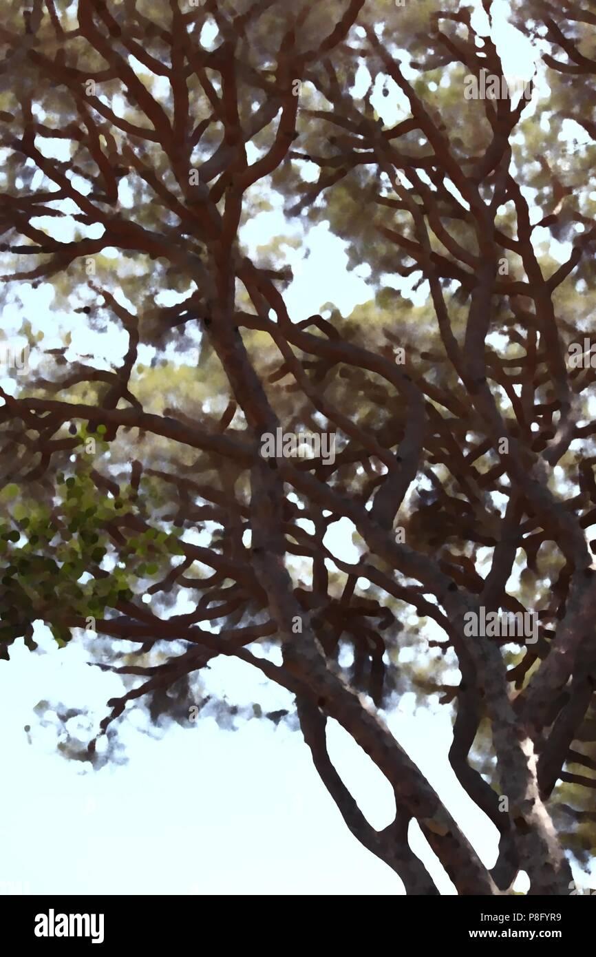 Abbildung einer Kiefer Branch als einen interessanten Hintergrund Stockbild