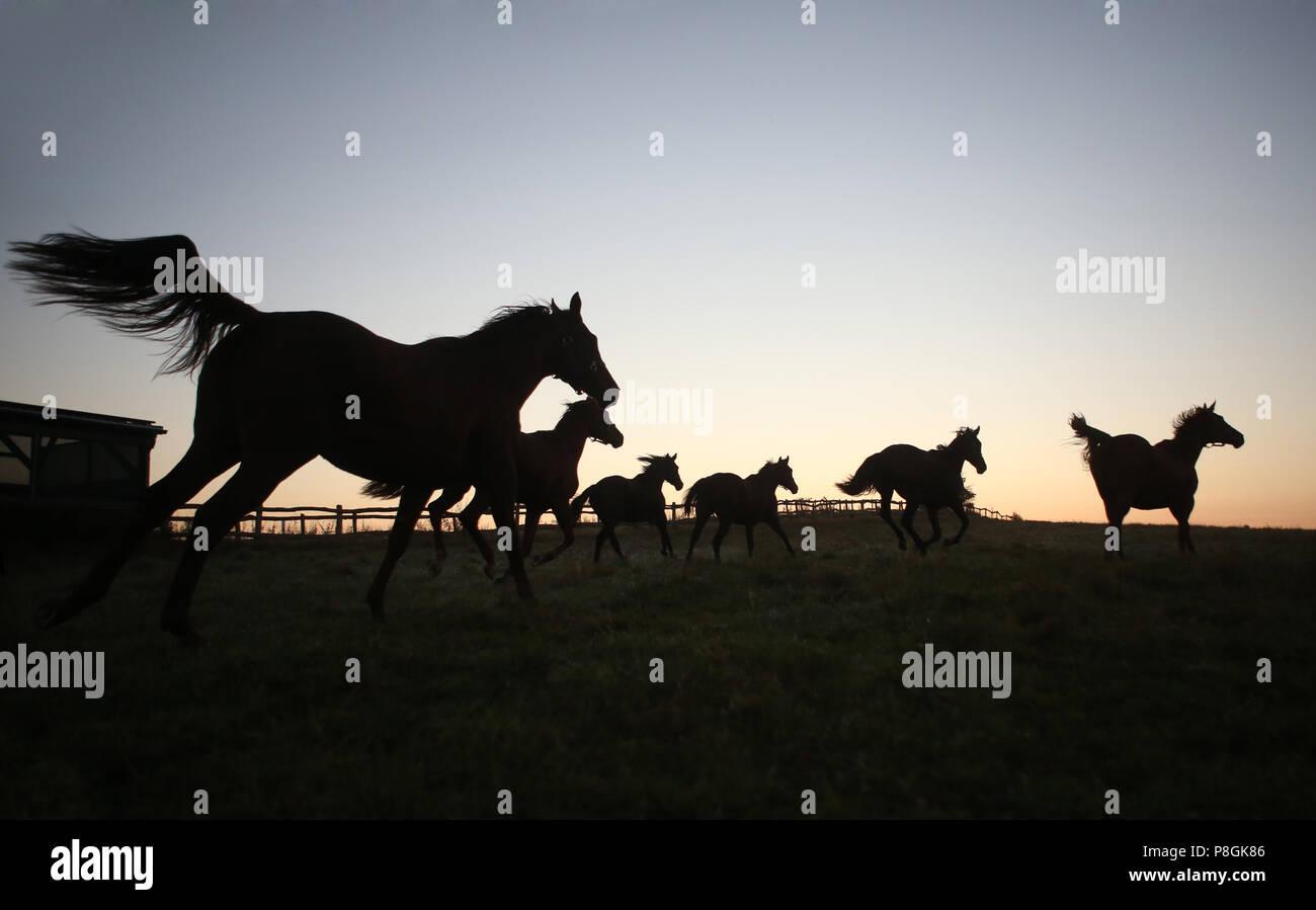 Die verzierte Goerlsdorf, Silhouette, Pferde im Morgengrauen auf der Weide galoppieren. Stockbild