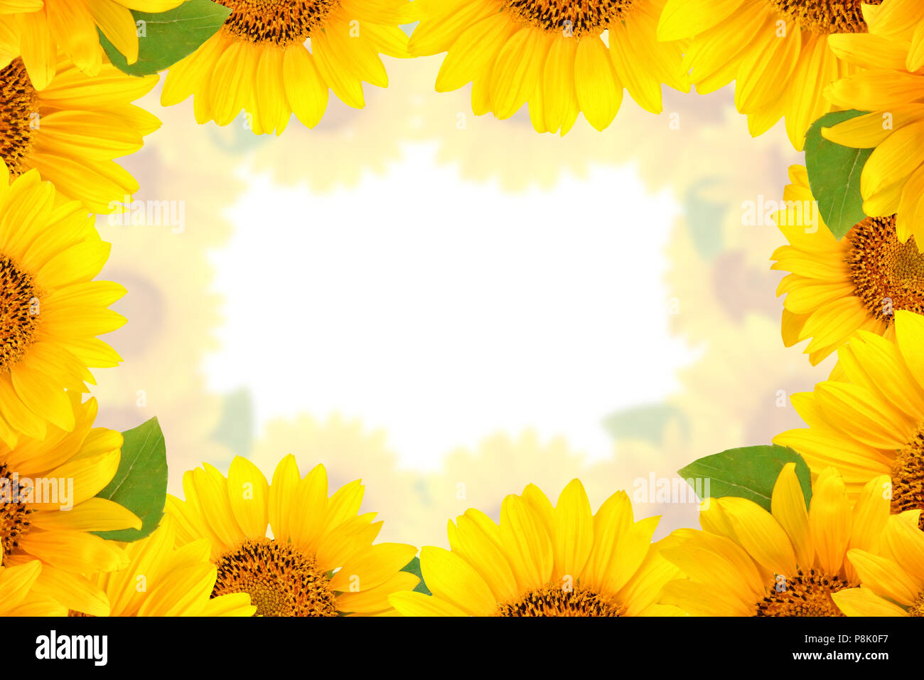 Ausgezeichnet Sonnenblumenbilderrahmen Bilder - Benutzerdefinierte ...