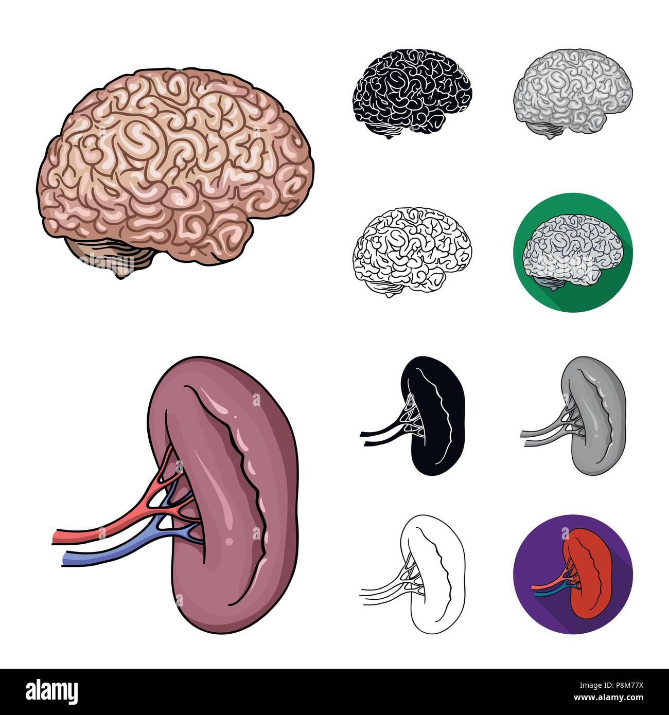 Internal Organs Icons Set Cartoon Stockfotos & Internal Organs Icons ...