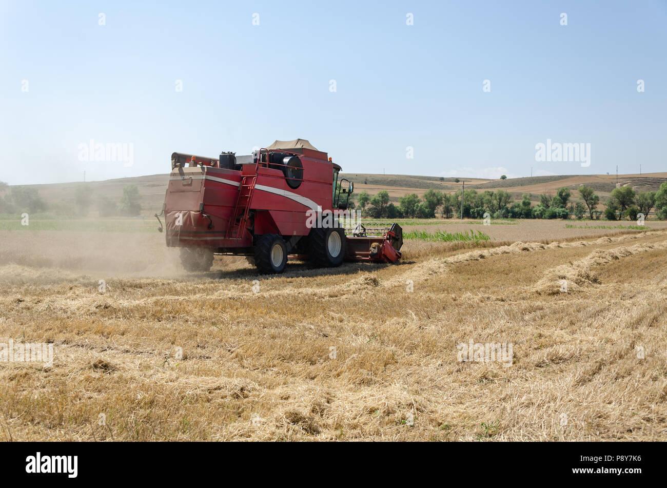 Der Feldhäcksler erntet die Weizenfeld im Sommer. Stockfoto
