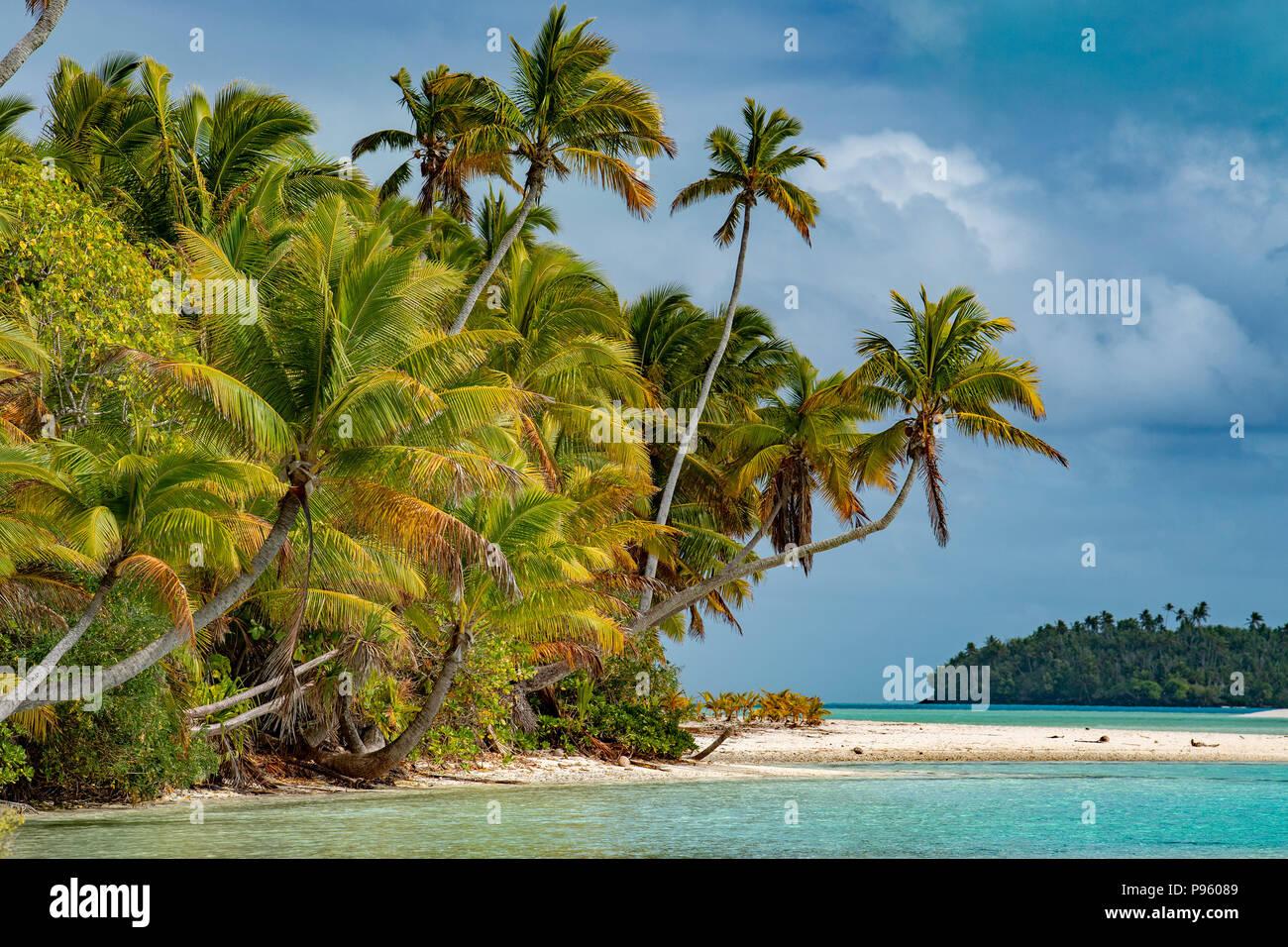 Insel Kokospalme auf Polynesien Strand wunderbare Lagune Stockbild
