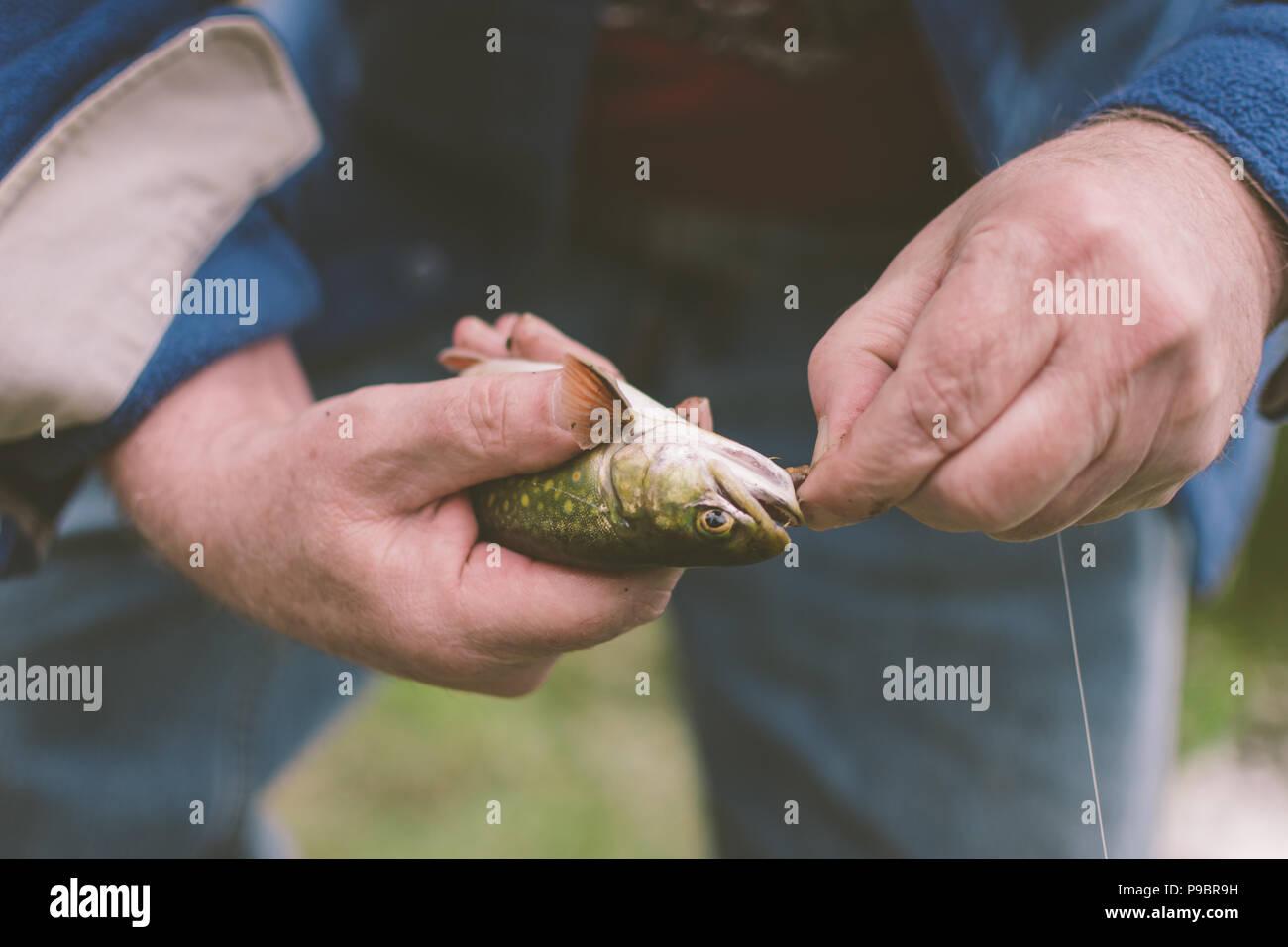 Entfernen eines Haken aus einem Fisch-Catch und Release Stockbild