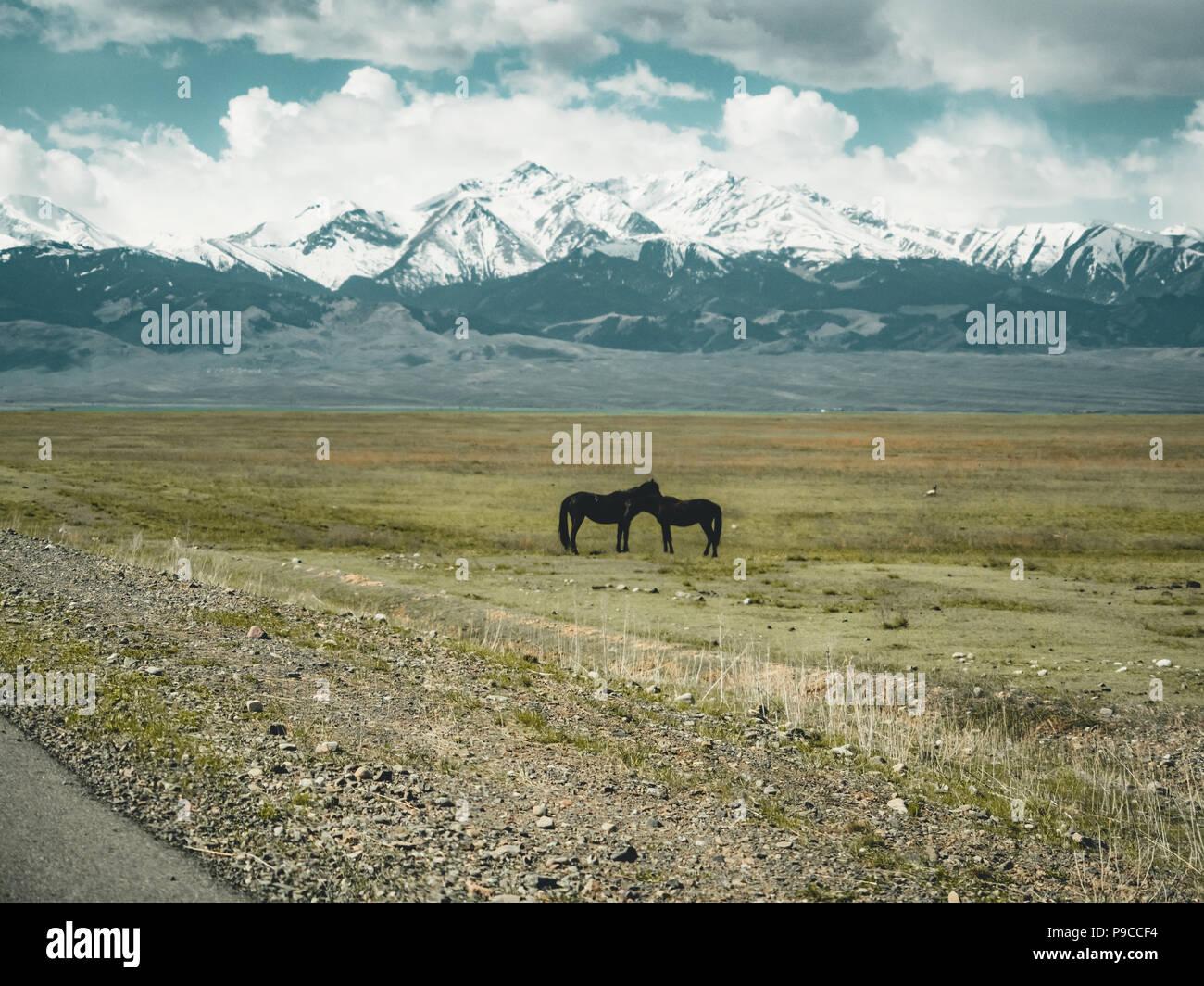 Pferde Straße in der Steppe mit Tian Shan Gebirge im Hintergrund, Kasachstan Zentralasien Stockbild