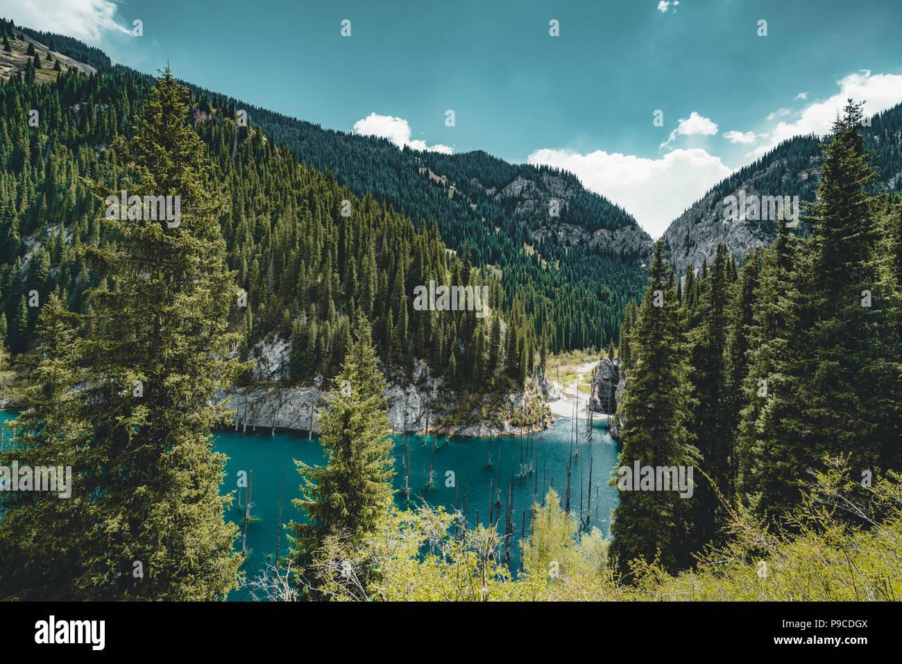 Die versunkene Wald von Lake Kaindy. Lake Kaindy, d. h. der 'Birke See' ist ein 400 Meter langer See in Kasachstan, die Tiefe in der Nähe von 30 m in einigen Bereichen erreicht. Stockbild
