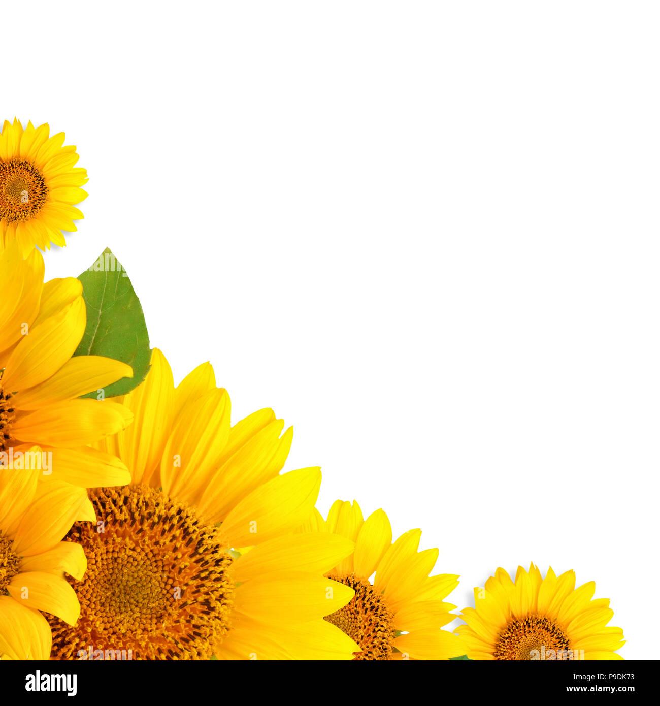Fantastisch Sonnenblumen Frame Zeitgenössisch - Rahmen Ideen ...