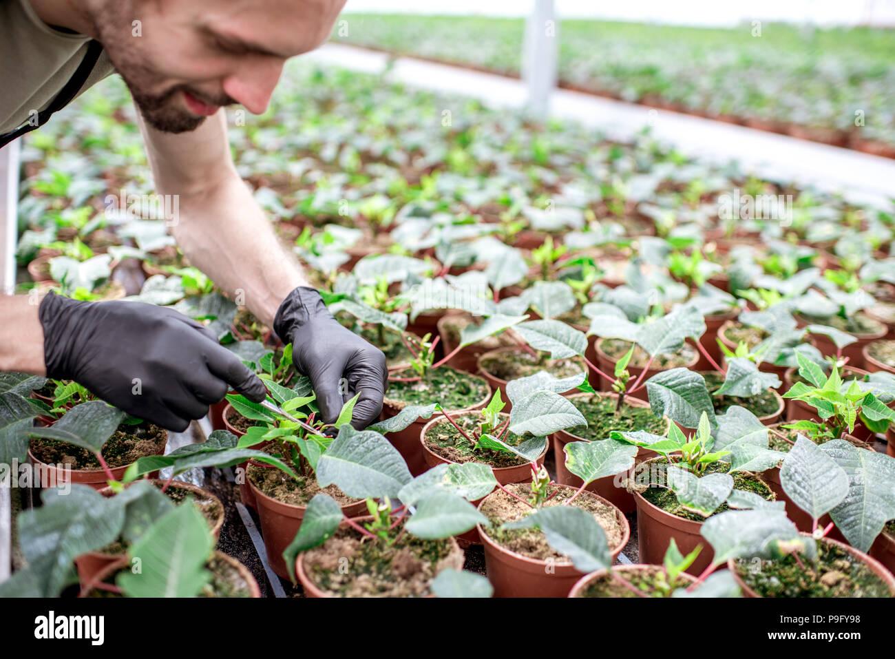 Schneiden von Pflanzen an der Plantage Stockbild