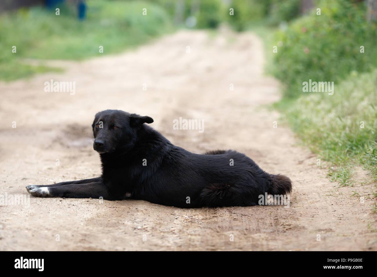 Großer schwarzer nasser Schwanz