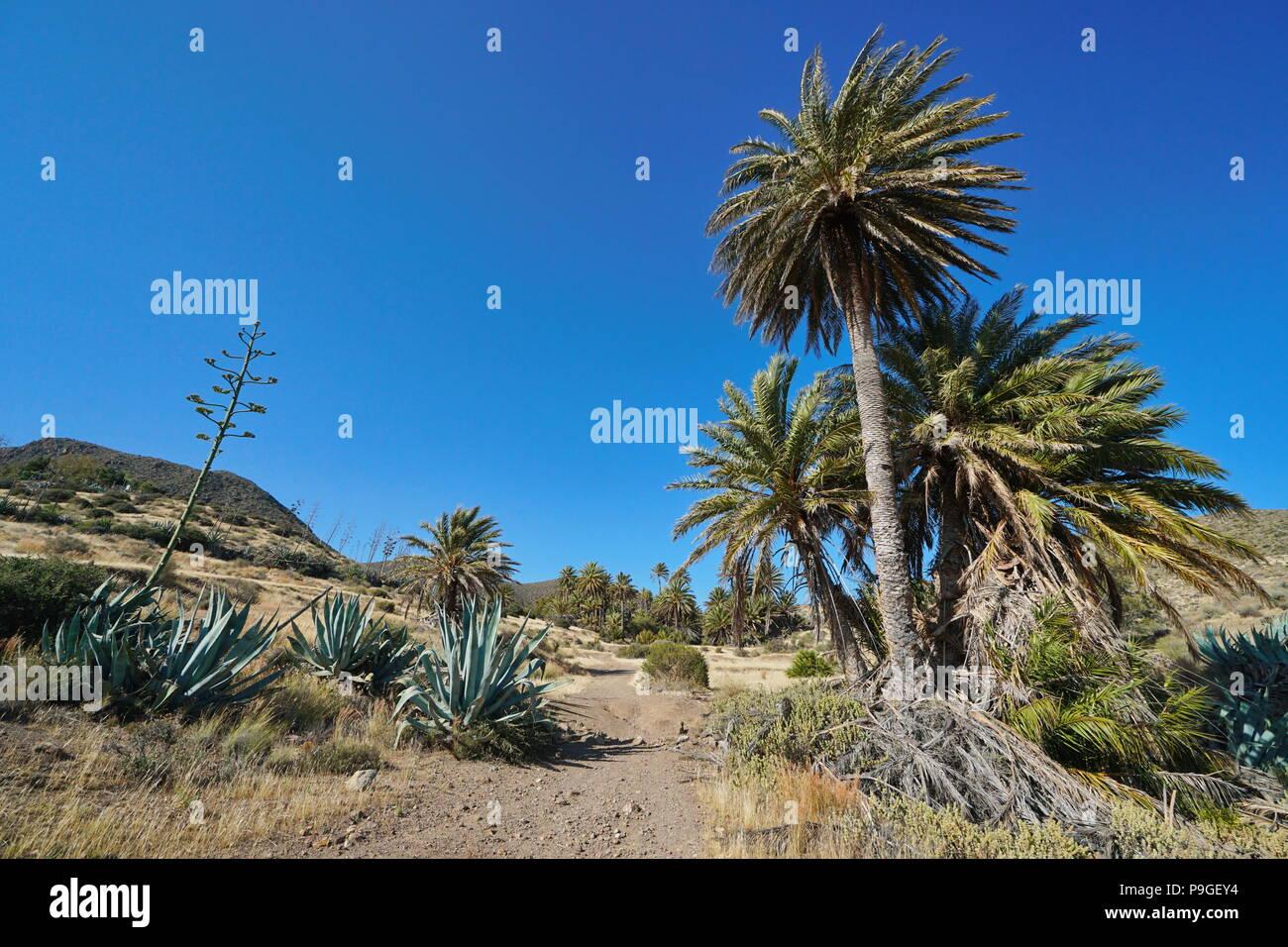 Weg mit Palmen und Agaven in der Nähe des Dorfes La Isleta del Moro in Cabo de Gata-Níjar, Almería, Andalusien, Spanien Stockbild