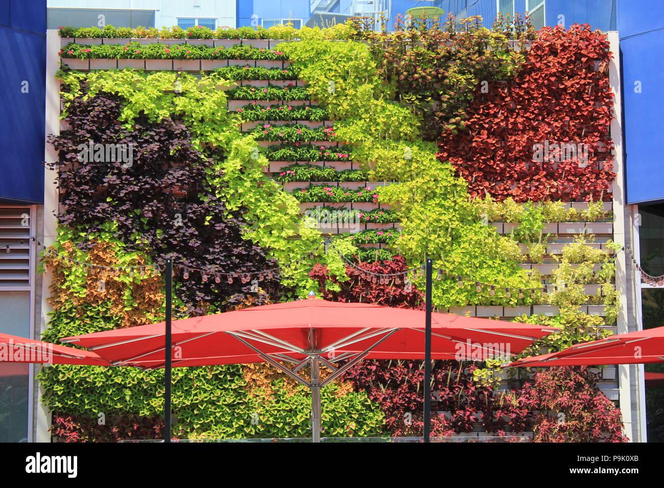 Wand Garten Und Container Gardening Lifestyle Mit Pantone Farbe Rot
