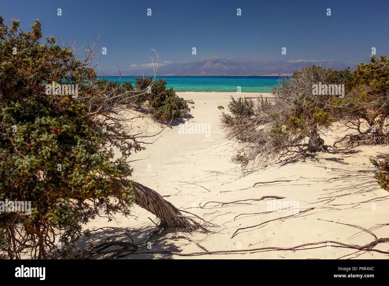 Großfrüchtige Wacholderbeeren (Juniperus macrocarpa) Bäume am Sandstrand mit Blick auf das Meer in der Ferne. Die Insel Chrissi, Ierapetra, Griechenland Stockbild