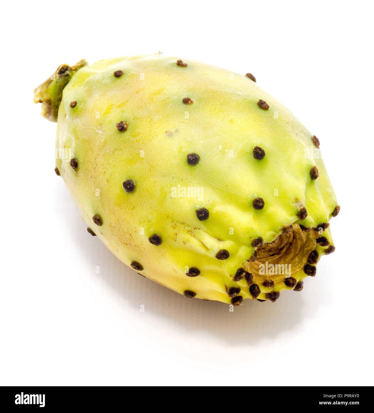 Ein ganzes grün gelb Feigenkaktus (Opuntia) auf weißem Hintergrund Stockbild