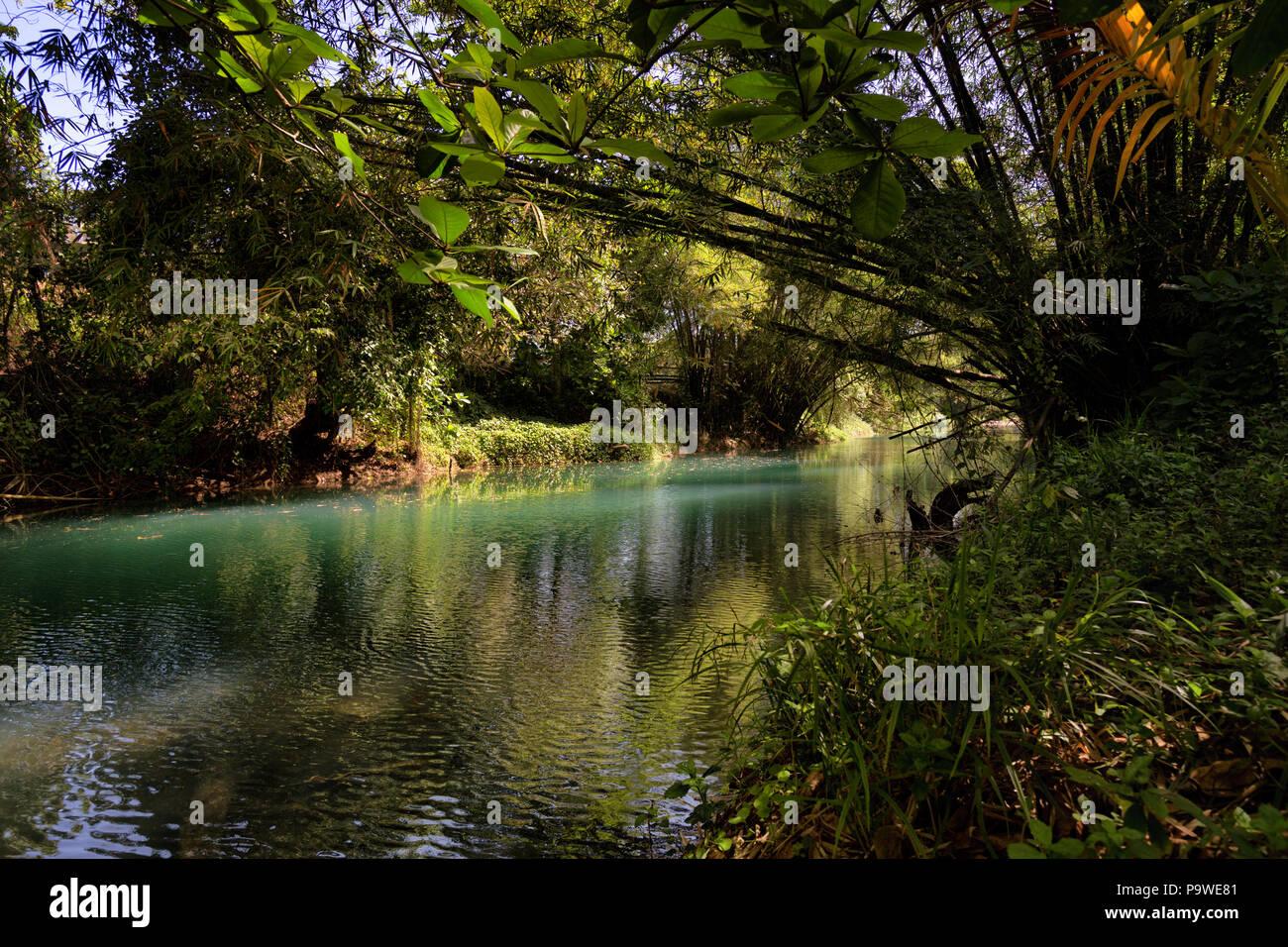 Regen Wald mit Fluss in Jamaika schöne Türkis gefärbten Fluss durch üppigen Regenwald läuft Stockbild