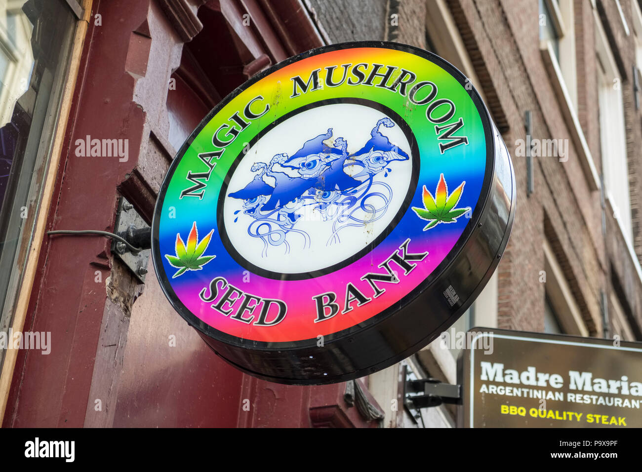 Drogen Store anmelden, Magic Mushroom Seed Bank, Amsterdam, Niederlande, Holland, Europa Stockfoto
