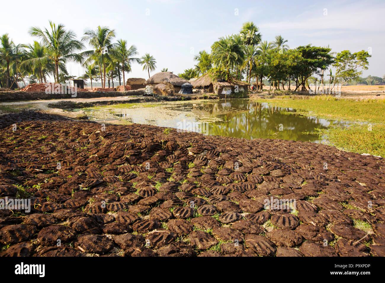 Kuhdung, die Kleinbauern in den Sundarbans, ein niedrig liegenden Bereich des Ganges Delta im Osten Indiens, die sehr anfällig für den Anstieg des Meeresspiegels. Die kuhdung ist als Biokraftstoff in der traditionellen Ton Öfen verwendet Stockbild
